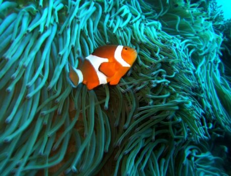 潛水行程推薦,綠島藍洞潛水享受七彩海底風情